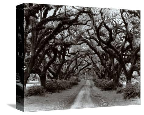 Path in the Oaks II, Louisiana-Monte Nagler-Stretched Canvas Print