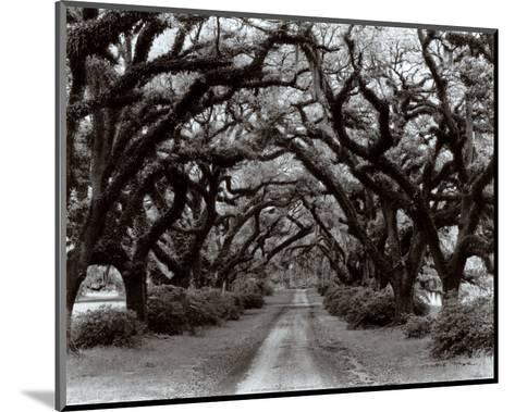 Path in the Oaks II, Louisiana-Monte Nagler-Mounted Art Print