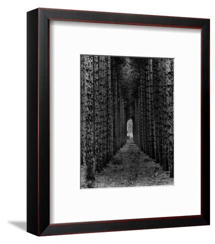 Red Pines, Empire, MI-Monte Nagler-Framed Art Print