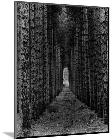 Red Pines, Empire, MI-Monte Nagler-Mounted Art Print