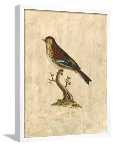 Selby Birds IV-Prideaux John Selby-Framed Art Print