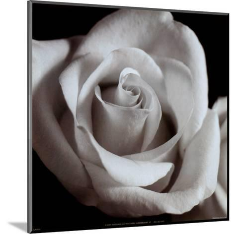Open Rose--Mounted Art Print