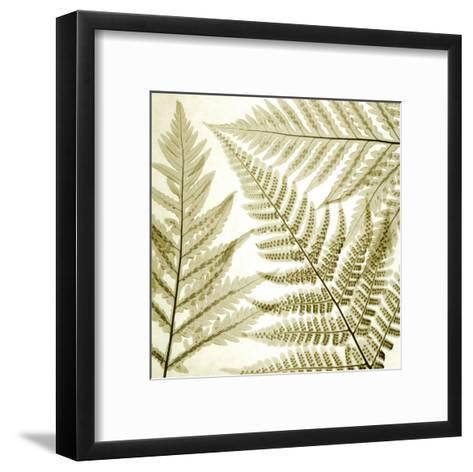 Ferns III-Steven N^ Meyers-Framed Art Print