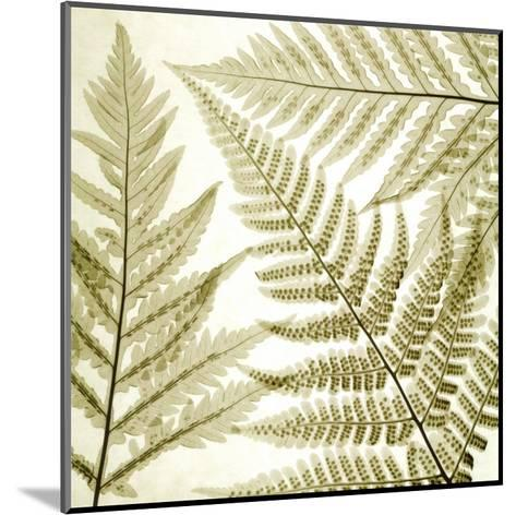 Ferns III-Steven N^ Meyers-Mounted Art Print