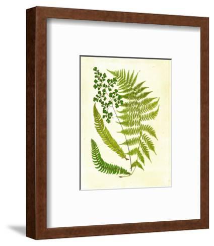 Fern with Crackle Mat II-Samuel Curtis-Framed Art Print