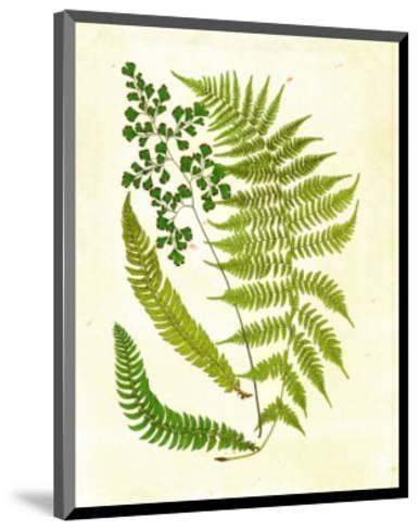 Fern with Crackle Mat II-Samuel Curtis-Mounted Art Print