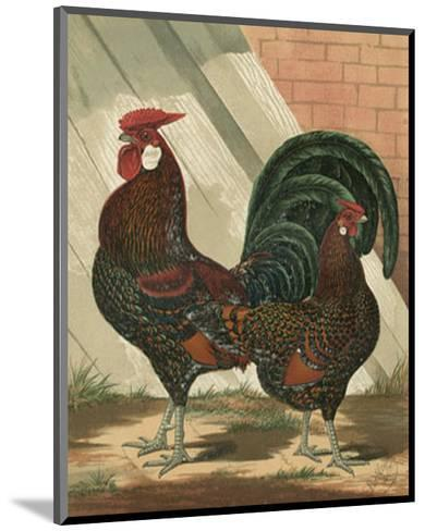 Roosters V-Cassell-Mounted Art Print