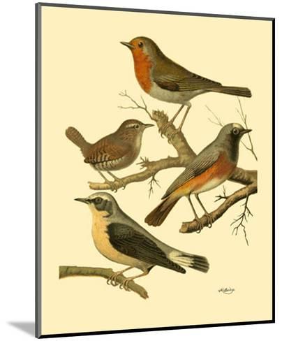 Domestic Bird Family III-W^ Rutledge-Mounted Art Print