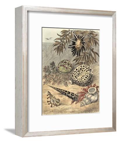 Shell Composition I--Framed Art Print