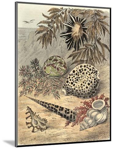 Shell Composition I--Mounted Art Print