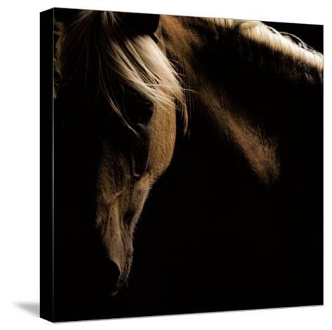 Spirit Horse-Tony Stromberg-Stretched Canvas Print