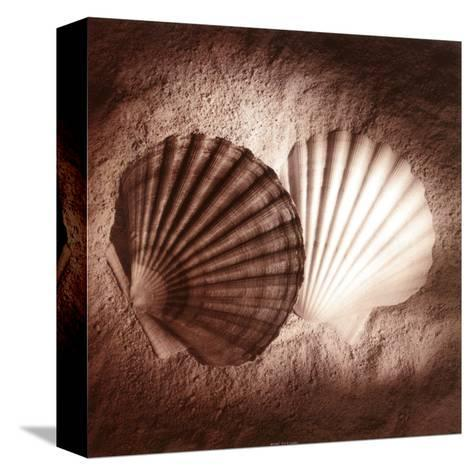 Scallops-Laurel Wade-Stretched Canvas Print