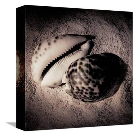 Cowrie-Laurel Wade-Stretched Canvas Print