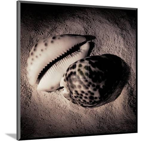 Cowrie-Laurel Wade-Mounted Art Print