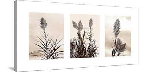 Grasslands-Jon Hart Gardey-Stretched Canvas Print