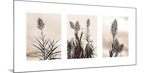 Grasslands-Jon Hart Gardey-Mounted Art Print