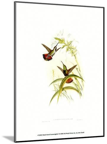 Small Gould Hummingbird I-John Gould-Mounted Art Print