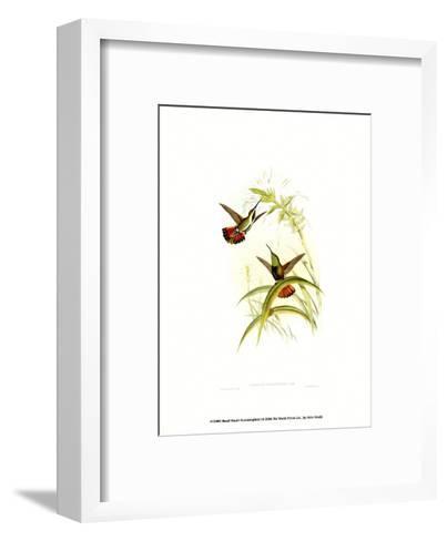 Small Gould Hummingbird I-John Gould-Framed Art Print