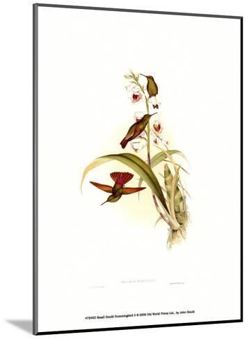 Small Gould Hummingbird II-John Gould-Mounted Art Print