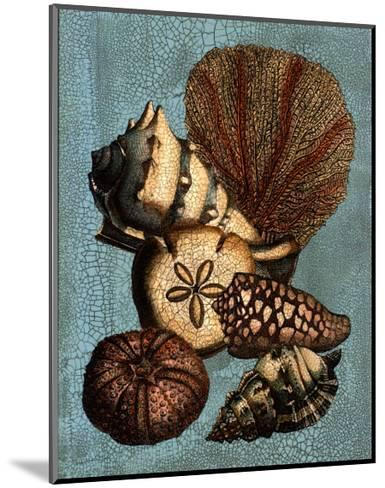 Shell and Coral Collection on Aqua II--Mounted Art Print