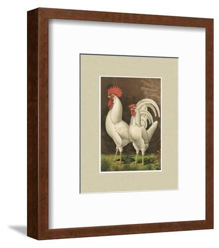 Roosters with Mat VI-Cassell's Poultry Book-Framed Art Print
