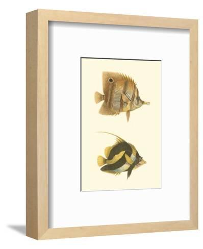 Antique Tropical Fish II--Framed Art Print