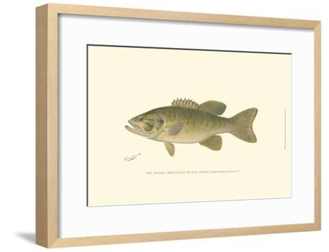 Small-Mouthed Black Bass-Denton-Framed Art Print