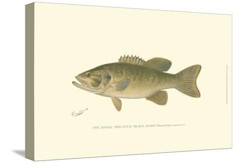 Small-Mouthed Black Bass-Denton-Stretched Canvas Print