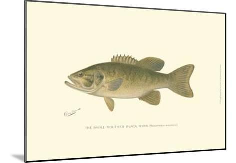 Small-Mouthed Black Bass-Denton-Mounted Art Print