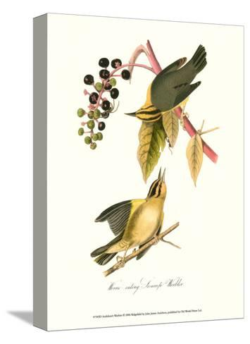 Warbler-John James Audubon-Stretched Canvas Print
