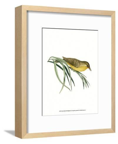 Yellow Wren-George Shaw-Framed Art Print