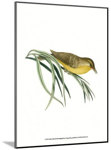 Yellow Wren-George Shaw-Mounted Art Print