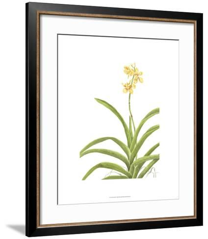 Orchid Study II-Pamela Shirley-Framed Art Print