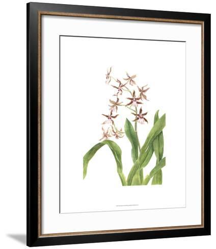 Orchid Study III-Pamela Shirley-Framed Art Print