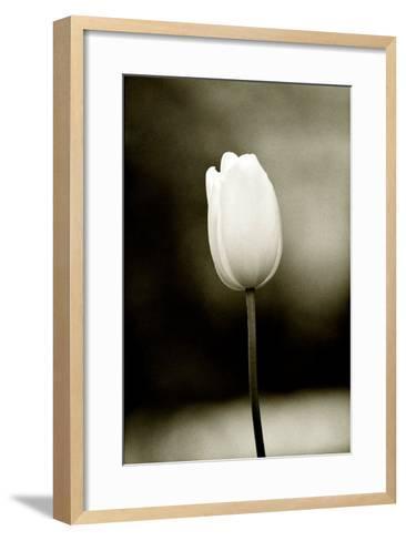 Early Morning Tulip-Jerry Koontz-Framed Art Print