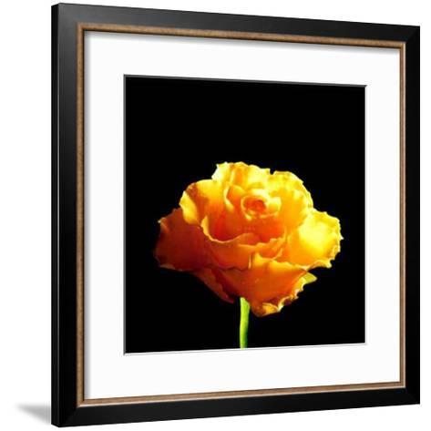 Yellow Rose-Mina Selis-Framed Art Print