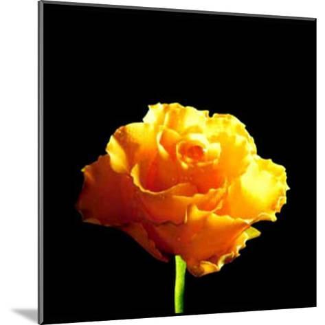 Yellow Rose-Mina Selis-Mounted Art Print