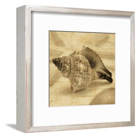 Conch-John Seba-Framed Art Print