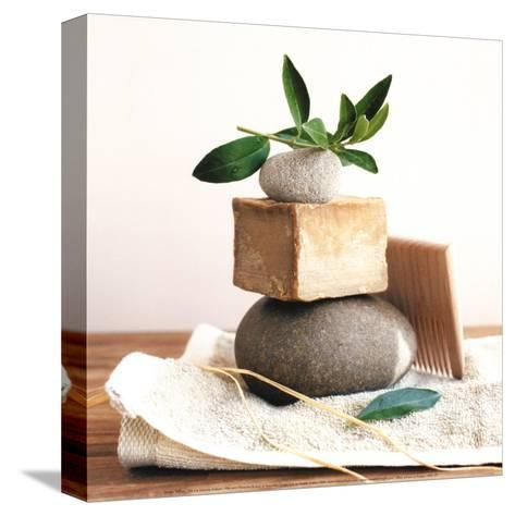 Pile with Olive Tree Branch-Amelie Vuillon-Stretched Canvas Print