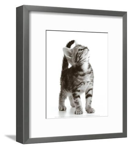 Curious Cat--Framed Art Print