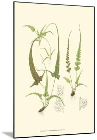 Spring Ferns II-J.h. Emerton-Mounted Art Print