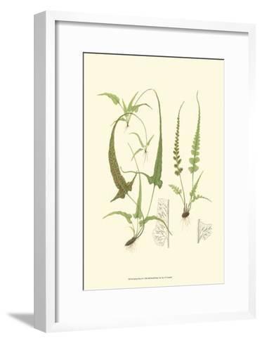 Spring Ferns II-J.h. Emerton-Framed Art Print