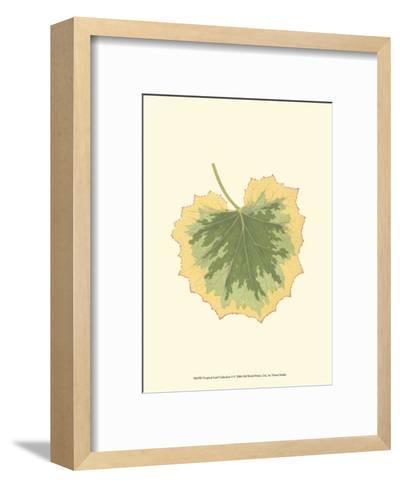 Tropical Leaf Collection V--Framed Art Print