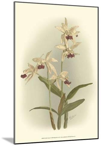 Orchid Garden I-H^g^ Moon-Mounted Art Print