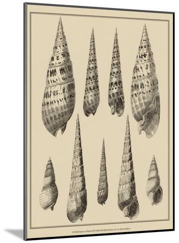 Shells on Khaki IX-Denis Diderot-Mounted Art Print