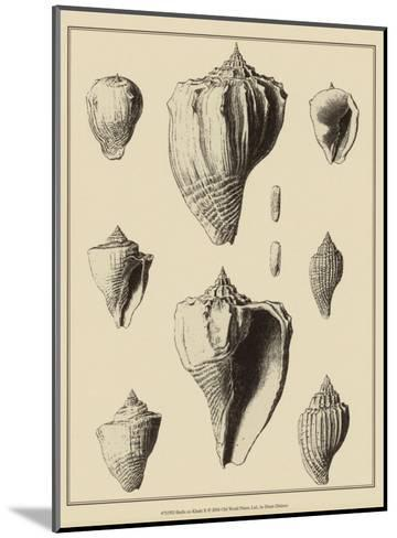 Shells on Khaki X-Denis Diderot-Mounted Art Print