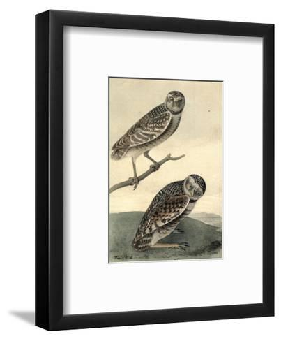 Burrowing Day Owl-John James Audubon-Framed Art Print