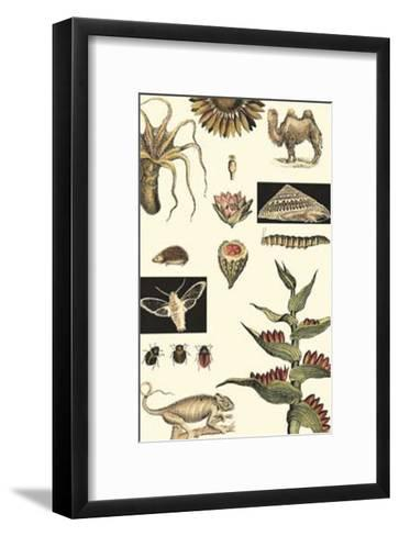 Nature's Curio III--Framed Art Print
