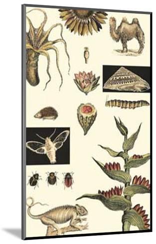 Nature's Curio III--Mounted Art Print