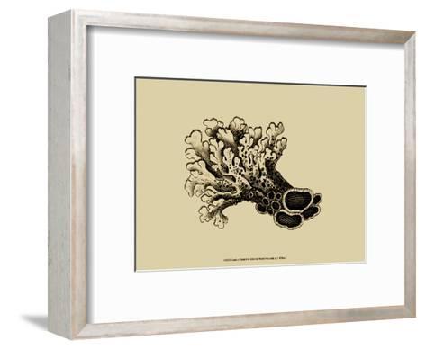 Coral on Khaki II-J^ Wilkes-Framed Art Print